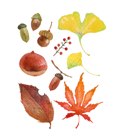 秋の紅葉 ドングリ セット 水彩 イラスト