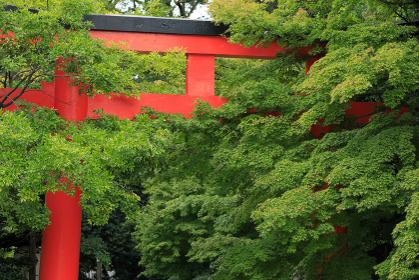 下鴨神社の緑色の葉と鳥居