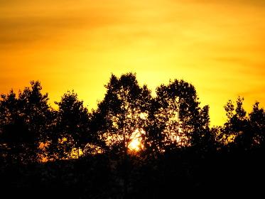 ニセコの夕日が森に沈む