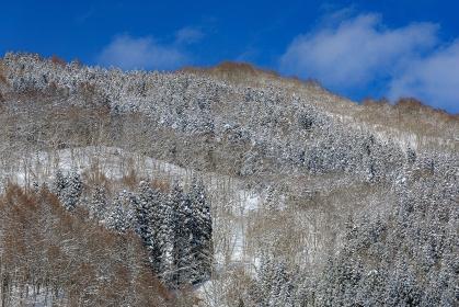 長野県・信濃町 冬の斑尾高原で眺める樹氷の山の風景