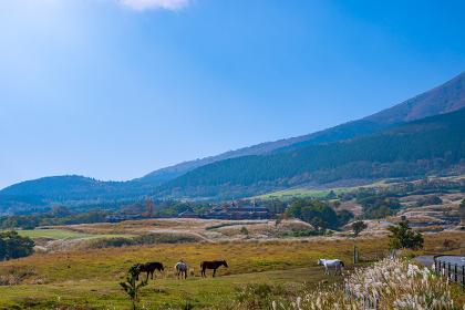 秋の久住高原に放牧された馬