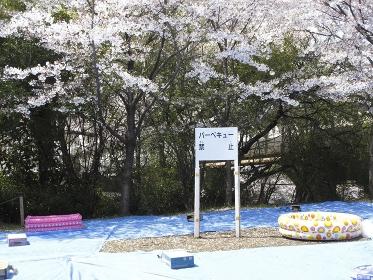 桜の花見会場のバーベキュー禁止看板