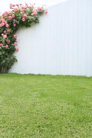 バラのある庭の合成向け背景素材