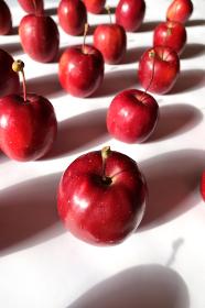 白い紙の上に整列した姫リンゴ 5 縦位置