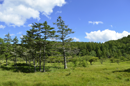 入笠山・登山道から眺めた夏山の風景(長野県・日本)