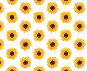 ひまわり ヒマワリ 向日葵 背景 白 夏 花 イラスト 手描き