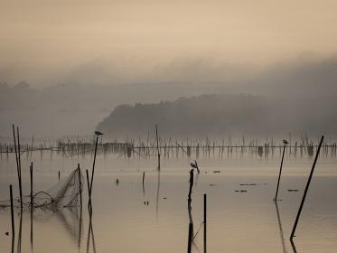 夜明けの千葉県印旛沼の風景