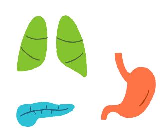 内臓 肺 膵臓 胃
