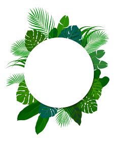 南国の植物 装飾フレーム