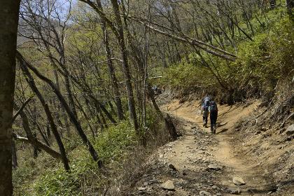雲取山の登山路