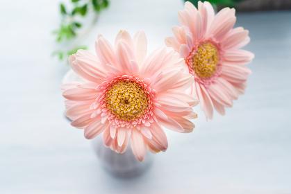 木製テーブルの上に置かれたガーベラの花