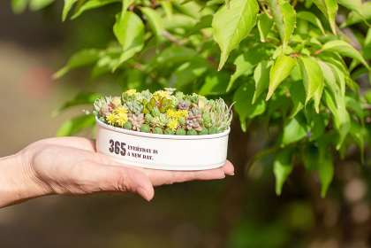 リメイク缶に寄せ植えされた多肉植物を持つ女性