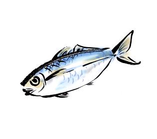 和風手描きイラスト素材 魚 アジ 鯵