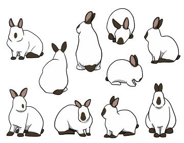 おすわりウサギ 短耳 ヒマラヤンセット