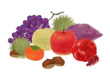 食欲の秋にぴったりの秋の果物ベクターイラストセット