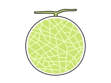 果物のメロンのイラスト