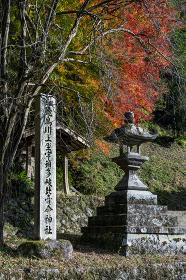 飛鳥川上坐宇須多伎比売命神社 紅葉