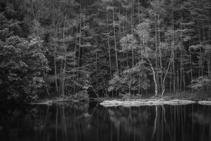 秋の朝の御射鹿池 モノクローム