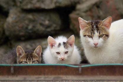 警戒するカメラ目線の親猫と2匹の子猫