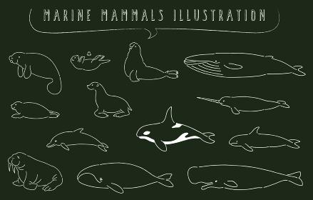 手描き風の海洋哺乳類のイラストセット
