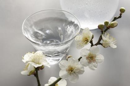 日本酒と梅の花
