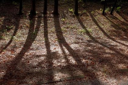 冬の朝低い太陽が木々の影を走らせる