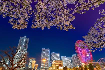 夜桜と横浜みなとみらいの夜景