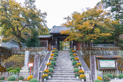 菊で飾られた修禅寺の入り口