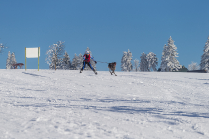 german championship sled dog forest women forest 2015