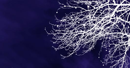 和風の枝模様 ゴシック 藍色 1612