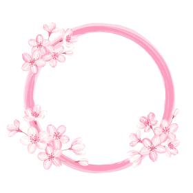 桜の円枠 水彩イラスト