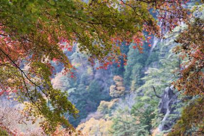 昇仙峡の紅葉 山梨県