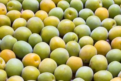 たくさんの完熟梅