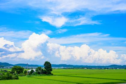 夏の緑と青空と入道雲