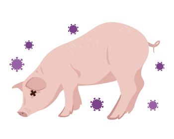 豚インフルエンザ 豚コレラ