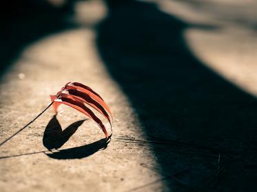 夕陽の中の紅葉した一枝