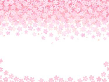 舞い落ちる桜の花のおめでたい背景 赤とピンクと白のフレーム