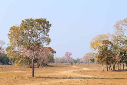 Beautiful Pantanal landscape from Brazil. Brazilian nature.