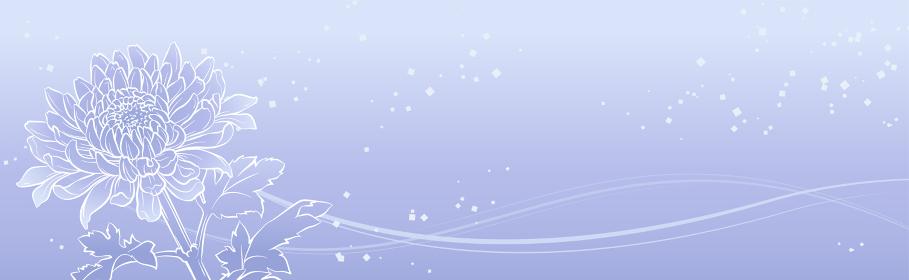 上品な菊の花のバナーイラスト(薄紫)