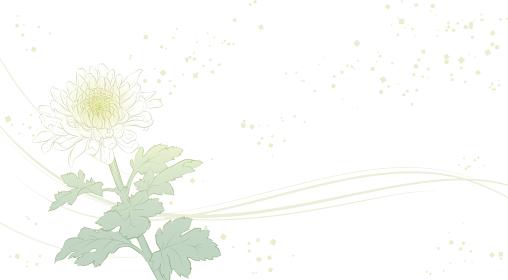 上品な菊の花の背景イラスト