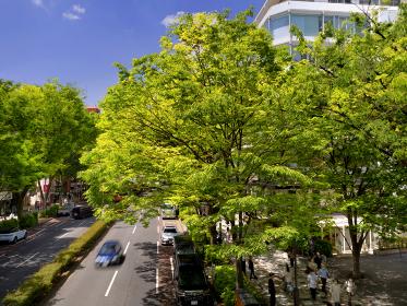 新緑の表参道