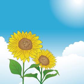 青空とひまわりの花 夏のイメージ