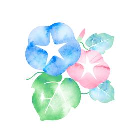暑中見舞い・残暑見舞いで使える夏の風物詩 水彩イラスト / 朝顔の花