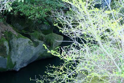 岩の隙間を流れる静かな川