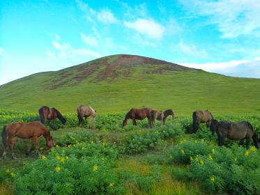 丘の下で放牧される複数の馬と青空