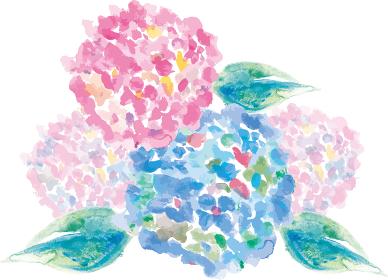 紫陽花:紫陽花 花 植物 水彩 手描き イラスト 梅雨 夏 初夏 あじさい寺 満開 季節の花 6月