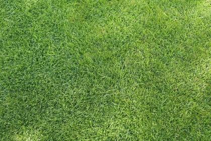 合成向け背景素材の芝生