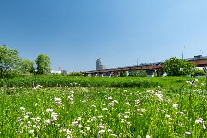 青空広がる初夏の荒川と川口市の風景