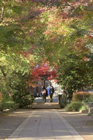 宝蓮寺の紅葉