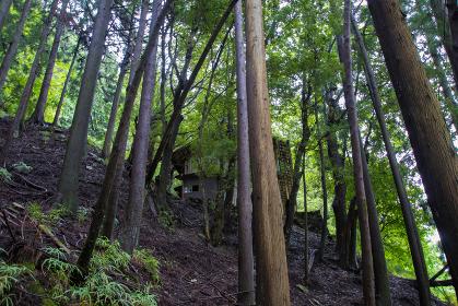 森の中の廃家